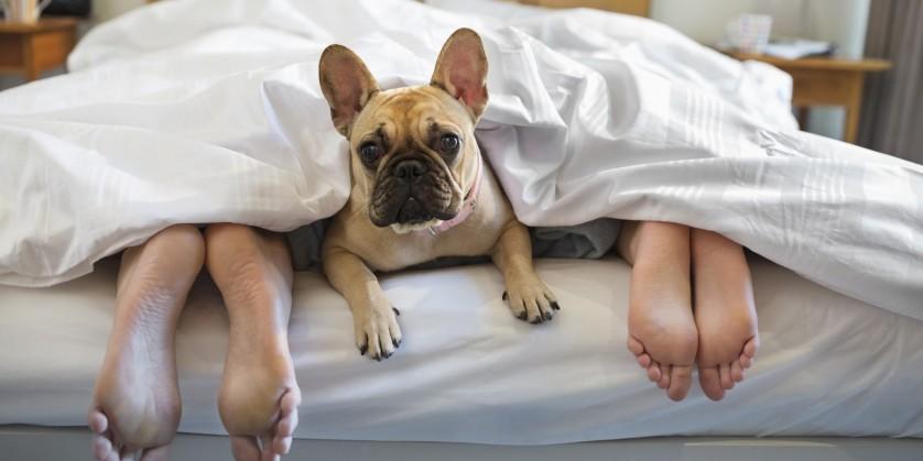 animais dormindo na cama