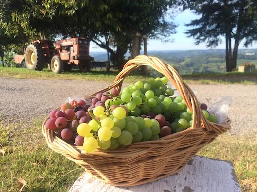 Zuchi sitio uvas - 151