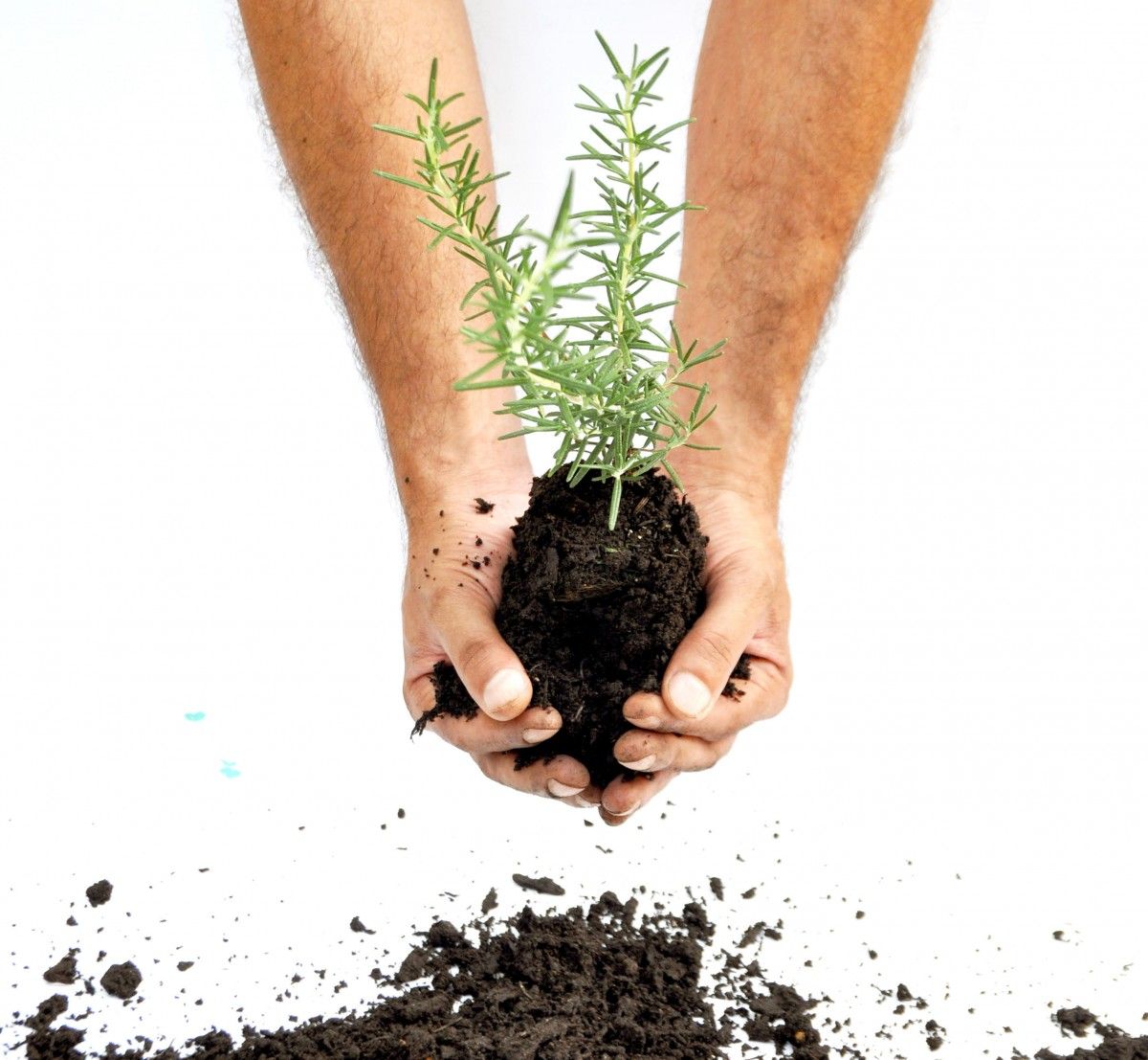 curso horta organica no fabrique