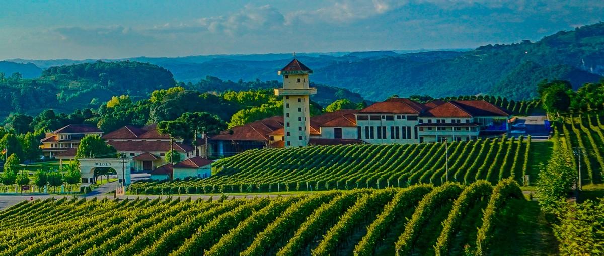 Vinicola Miolo lanca linha Single Vineyard